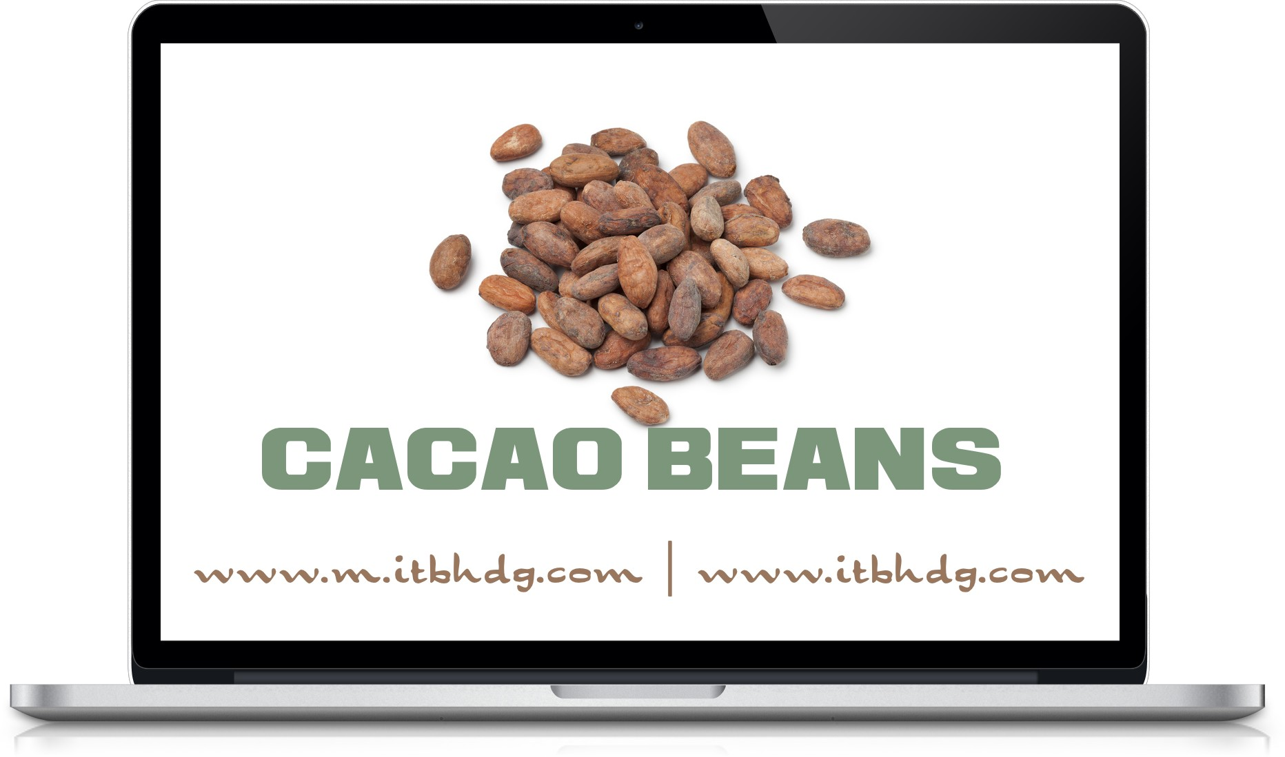 Cacao, Cocoa, cacao beans, cacao nibs, cocoa powder, cocoa butter, cocoa liquor | www.m.itbhdg.com | www.itbhdg.com