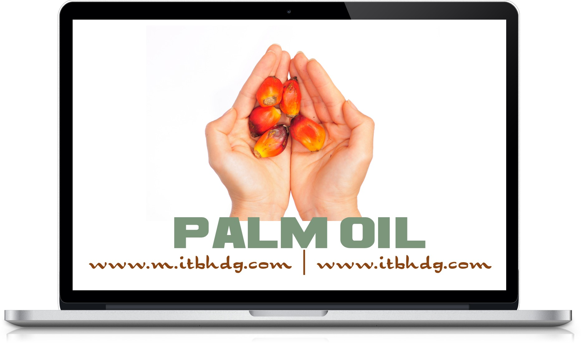 RBD Palm Oil, RBD Palm Olein, RBD Palm Kernel Oil, RBD Palm Stearin, Crude Palm Oil (CPO)  | www.m.itbhdg.com | www.itbhdg.com